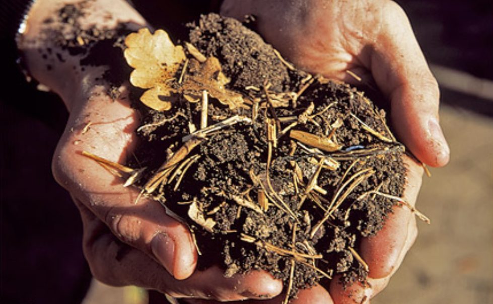 October Gardening Tips featuring a Guide to Leaf Mould!